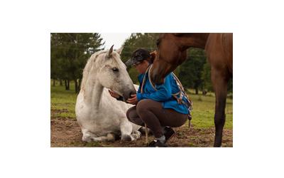 www.facebook.com/Dornova-met%C3%B3da-pre-zvierat%C3%A1-Monika-Kozov%C3%A1-181671152174286