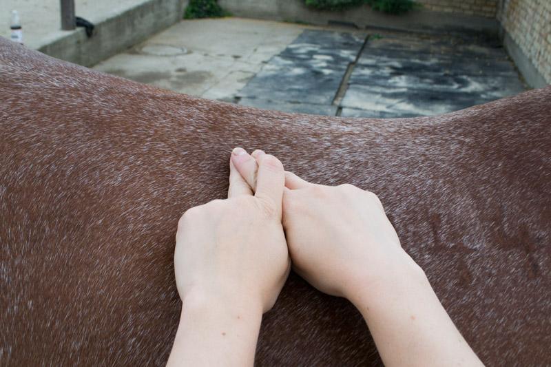 The Equine Touch / Bowenova masáž